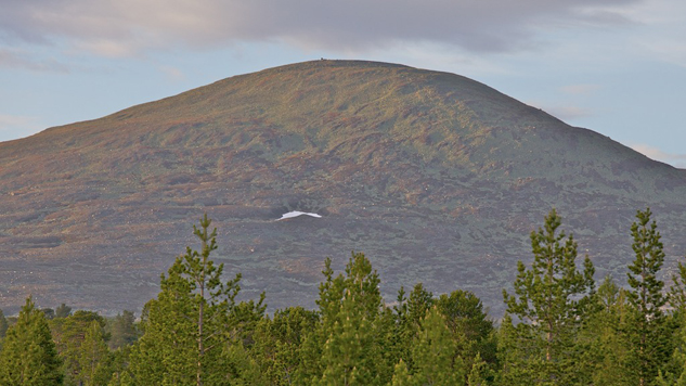 Stor-Svuku – one of the rounded mountains in Gränslandet. Photo: Naturcentrum AB.
